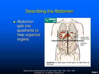 Describing the Abdomen