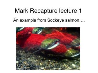 Mark Recapture lecture 1