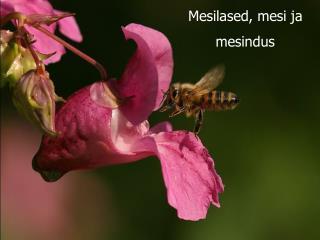 Mesilased, mesi ja  mesindus