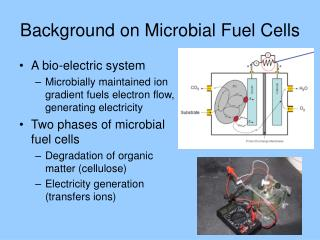 Background on Microbial Fuel Cells