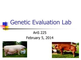 Genetic Evaluation Lab
