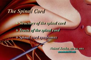 The Spinal Cord    Structure of the spinal cord   Tracts of the spinal cord  Spinal cord syndromes