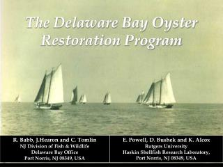 The Delaware Bay Oyster  Restoration Program