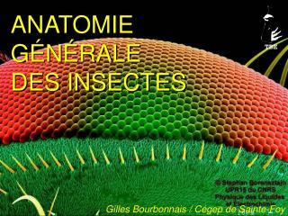 ANATOMIE G�N�RALE DES INSECTES