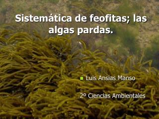 Sistemática de feofitas; las algas pardas.