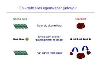 En kræftcelles egenskaber (udvalg):