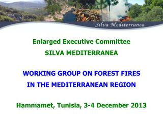 WORKING GROUP ON FOREST FIRES  IN THE MEDITERRANEAN REGION