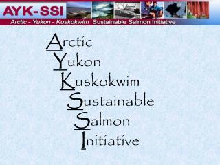 A rctic Y ukon K uskokwim  S ustainable  S almon  I nitiative