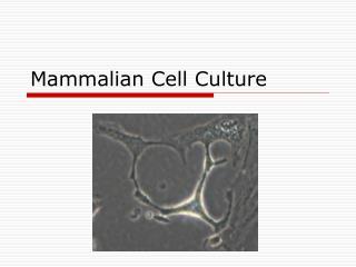 Mammalian Cell Culture
