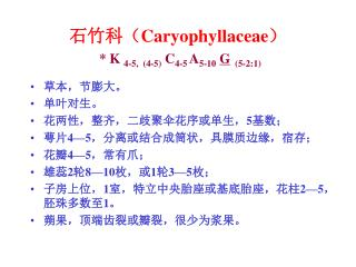 石竹科( Caryophyllaceae ) *  K  4-5,  (4-5)  C 4-5  A 5-10 G   (5-2:1)
