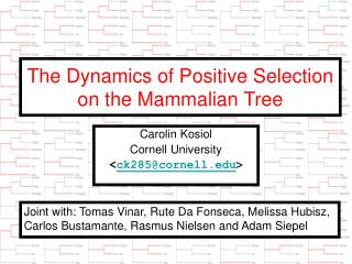 The Dynamics of Positive Selection on the Mammalian Tree