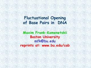 Two types of interactions stabilize the DNA double helix: base pairing and base stacking