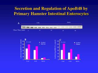 Secretion and Regulation of ApoB48 by  Primary Hamster  Intestinal Enterocytes