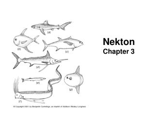 Nekton Chapter 3