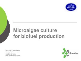 Microalgae culture  for biofuel production