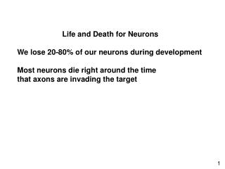 Life and Death for Neurons We lose 20-80% of our neurons during development