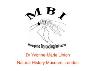Dr Yvonne-Marie Linton Natural History Museum, London