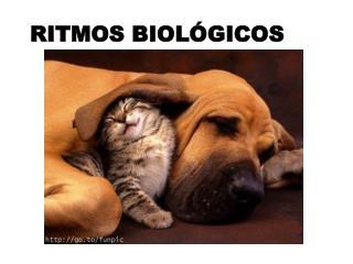 RITMOS BIOLÓGICOS