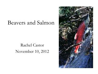 Beavers and Salmon