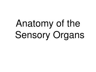 Anatomy of the Sensory Organs