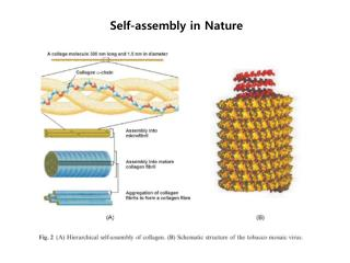Self-assembly in Nature