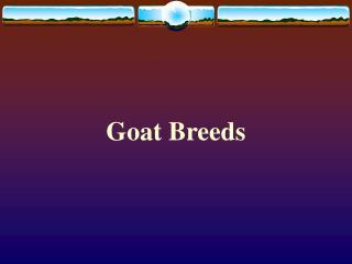Goat Breeds