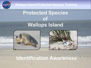 Protected Species  of  Wallops Island