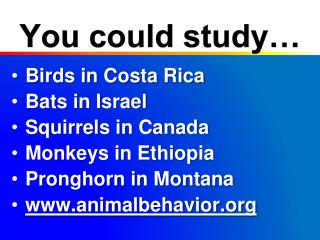 You could study�