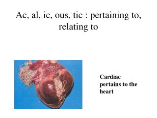 Ac, al, ic, ous, tic : pertaining to, relating to