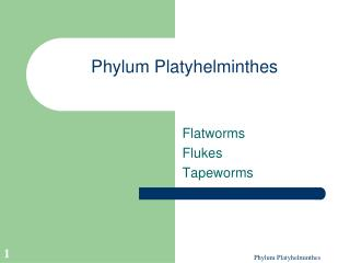 Phylum Platyhelminthes