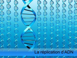 La réplication d'ADN