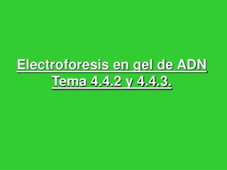 Electroforesis en gel de ADN Tema 4.4.2 y 4.4.3.
