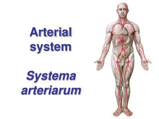 Arterial system Systema arteriarum