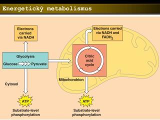 Energetický metabolismus