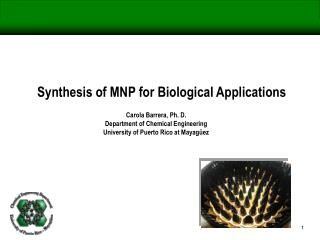 Synthesis of MNP for Biological Applications