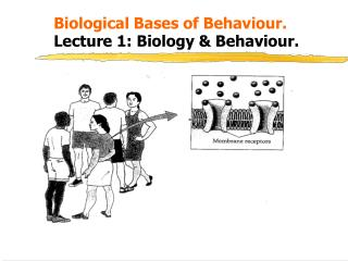 Biological Bases of Behaviour. 	Lecture 1: Biology & Behaviour.