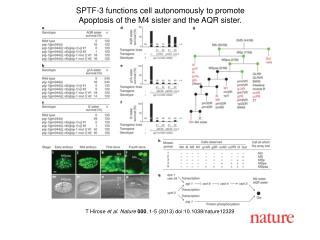 T Hirose  et al.  Nature  000 ,  1 - 5  (2013) doi:10.1038/nature 12329