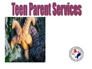 Teen Parent Services