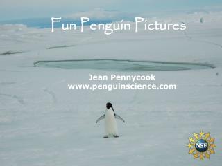 Jean Pennycook penguinscience