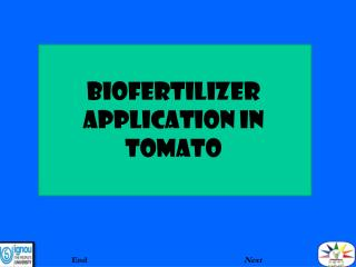 BIOFERTILIZER aPPLICATION IN TOMATO