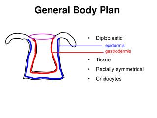 General Body Plan