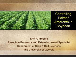 Controlling Palmer Amaranth in Soybean
