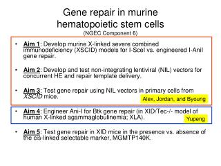 Gene repair in murine  hematopoietic stem cells  (NGEC Component 6)