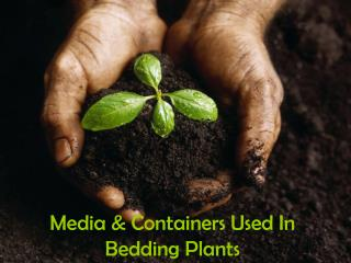 Media & Containers Used In Bedding Plants