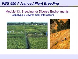 PBG 650 Advanced Plant Breeding