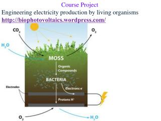 Course Project Engineering electricity production by living organisms