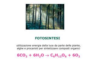 FOTOSINTESI  utilizzazione energia della luce da parte delle piante,