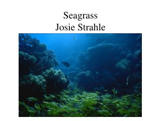 Seagrass Josie Strahle