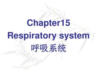 Chapter15 Respiratory system 呼吸系统