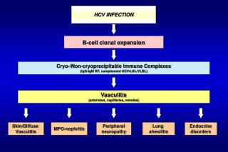 HCV INFECTION